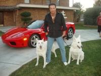 Harmik Cars & Dogs