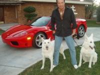 Harmik & Dogs