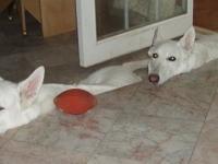 Harmik Dogs